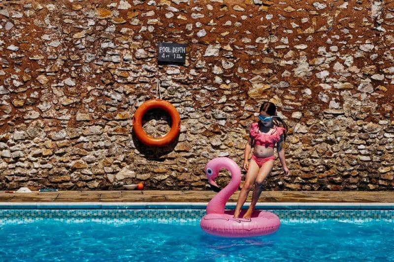 flamingoes in pool